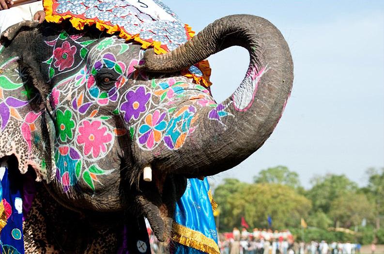 holi-festival-india-jaipur-8--2